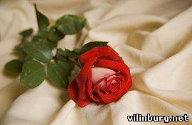 Цветок и Ветер